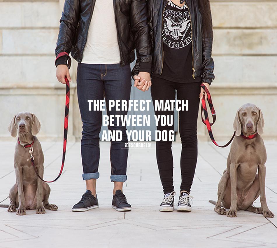 Collares para perro y martingale para galgo brott barcelona - Brott barcelona ...