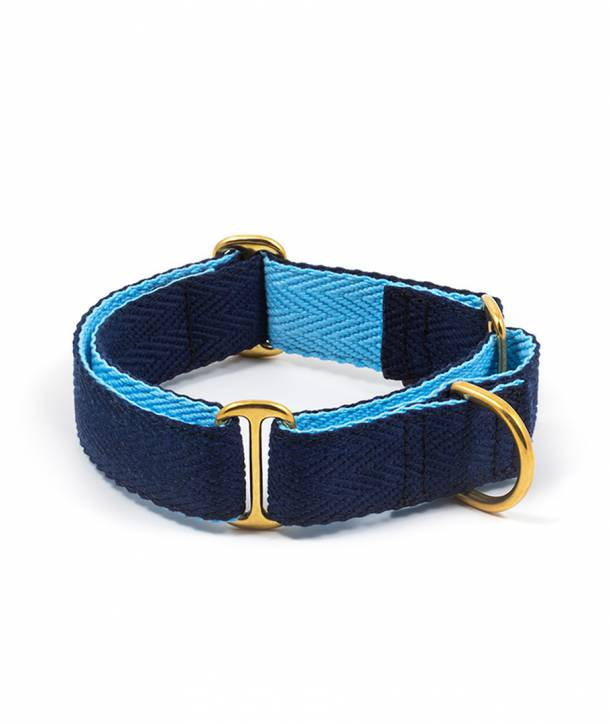 Collar per gos royal blue and sky blue
