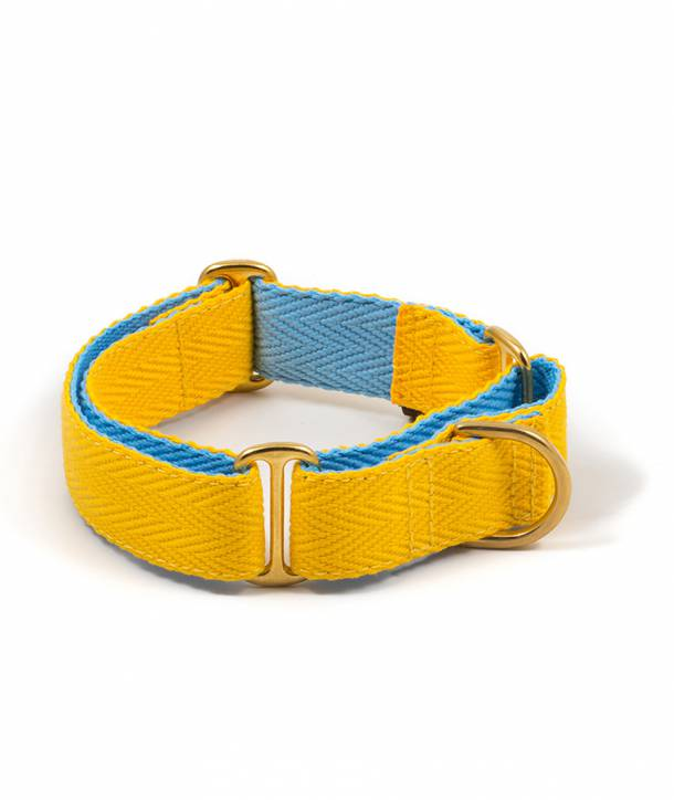 Yellow and sky blue dog collar