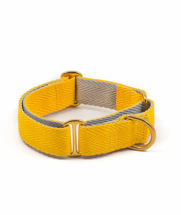 Yellow and grey greyhound collar