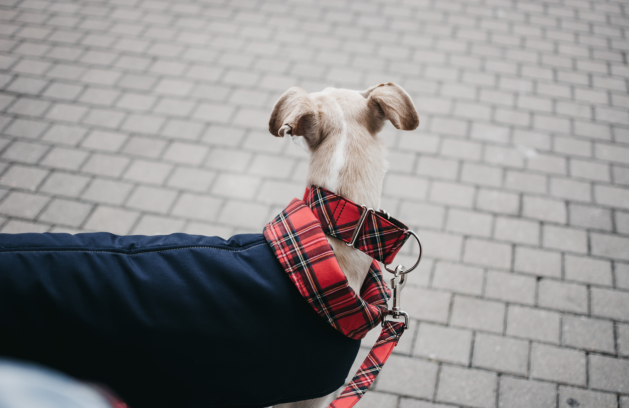 Red-tartan-dog-coat-brottdog-2